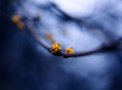 Locus ahead. (next_in_line) Tags: park blue macro nature yellow canon spring dof bokeh sigma 1770 xti 400d bokehlicious eos400d canoneos400d canon400d