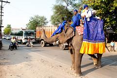 Hatari (gurbir singh brar) Tags: road elephant traffic pachyderm singh katta brar gurbir nihangs majha harike gurbirsinghbrar bidhichand faridkotamritsarroad