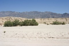 Borrego Springs003 Photo