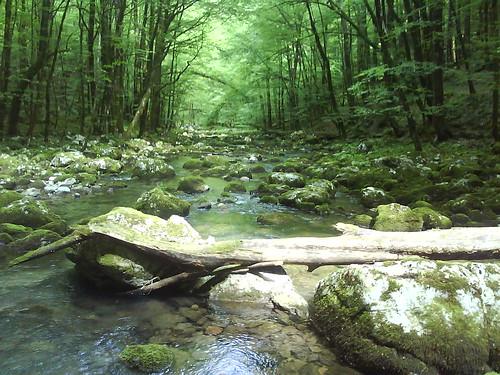 Belca pogled niz potok