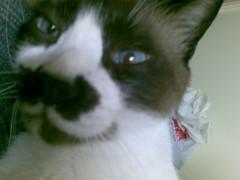 Charlie - closeup