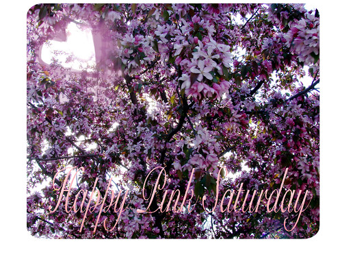 Happy-Pink-Saturday-Pink-Blossoms