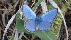 Blue Butterfly (4) by Mully410 * Images