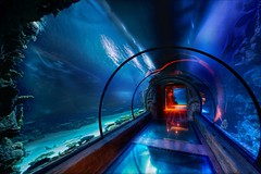 The Secret Underwater Passage (Stuck in Customs) Tags: world ocean travel vegas blue wild color scale colors beautiful composition swimming photography shark amazing artist underwater tour view shot lasvegas gorgeous nevada deep acquarium carribean super grades journey attractive dreamy top100 portfolio lovely capture mandalaybay creatures discovery magical depth trey combination eyecatching cephalopods d3x