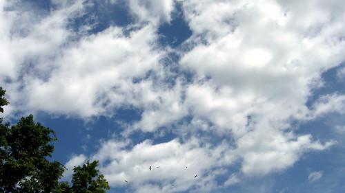 hawks seen leaving High Ledges