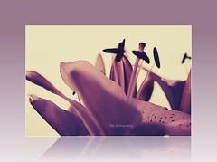 Happy Quinta Flower (Teka e Fabi®) Tags: flor group lilac grupo quintaflower quinta ih rosepetal lilás masterphotos tekaefabi flickrawesomeblossoms flickrflorescloseupmacros lovely~lovelyphoto