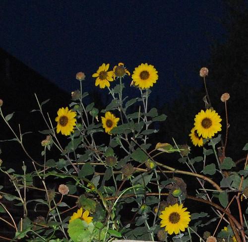 Morning Flowers BEST - 08-19-09