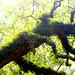 Tree with Fern and Lichen - Cochran Mill