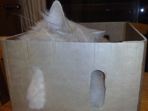 Cat-in-a-box