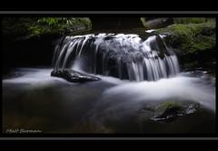 The Grand Canyon wilderness. (matt burman) Tags: green wet water forest waterfall moss rainforest time ferns lapse