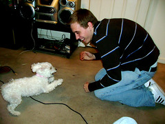 A Bichon at Play (thejmt) Tags: dog white cute shihtzu adorable fluffy precious cuddly aww bichon frise playtime blitz shitzu fergie ferguson