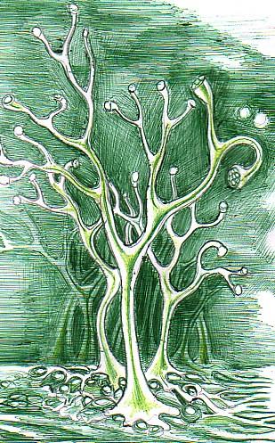 Rhynia prima planta de pe pamant  desen facut cu un pix verde