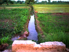 Village punjab (M.Rizwan Rafique) Tags: pakistan green nature water grass rural daylight canal village rice natural punjab hdr