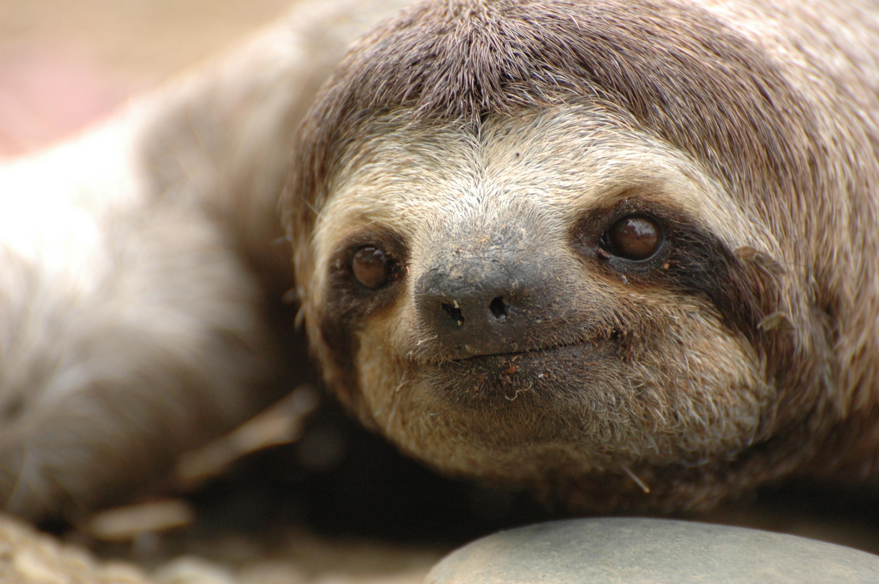 smiling sloth gif