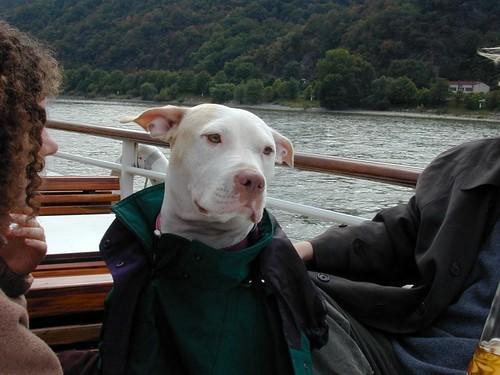 Bogie on the Rhine fall 1999