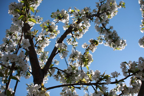 A primavera a chegar ao Reguengo III