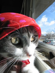 I'm sorry, Pekoe! (Kira Bajira) Tags: pet cat kitty musicals fiddlerontheroof petsinclothes march2009