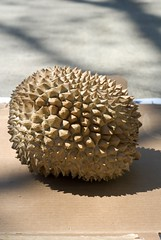 durian waits