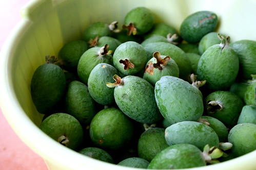 Wednesday: Bucket of Feijoas