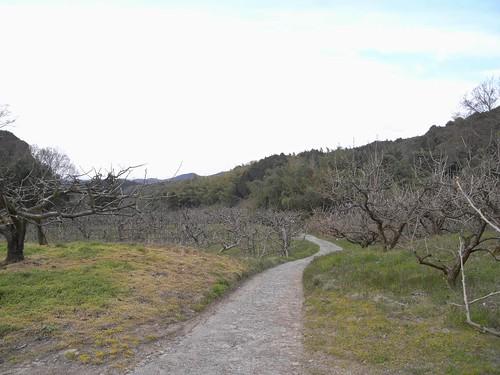 「山の辺の道」@天理-51