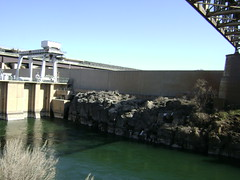 Below the Dam 11 (Jenny Lynne Semenza) Tags: birding idaho americanfalls