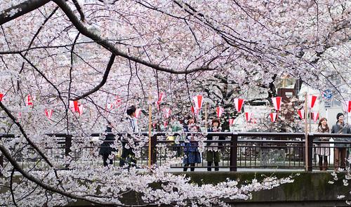 Sakura in Naka Meguro 02