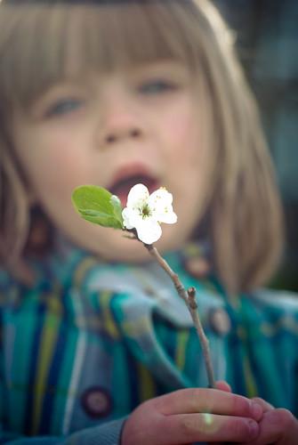 blossoms-46