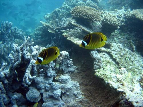 ningaloo reef snorkel