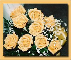 GOLDEN ROSES (fantartsy JJ *2013 year of LOVE!*) Tags: flowers autumn friends roses macro fall love floral beauty yellow amber photo seasonal sensational topgun tistheseason blueribbonwinner altruistic bej anawesomeshot impressedbeauty diamondclassphotographer theperfectphotographer dragondagger beautyunnotice simplythebest~flowers alittlebeauty naturescreations passionateinspirations thecelebrationoflife zuzkasfavorites heavenlycaptures secretenchantedgardens lizasenchantedgarden artisticphotographic daarklands