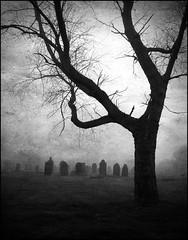 In the Sea Fret (Cul 9) Tags: mist cemetery graveyard fog headstones southshields gravestones blackwhitephotos westoecemetery