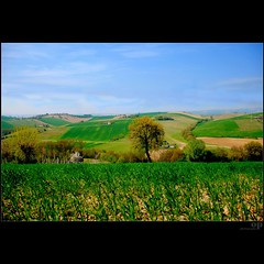 The New Wheat Grows on Sweet Hills (Osvaldo_Zoom) Tags: rural landscape spring bravo wheat hills crops marche macerata