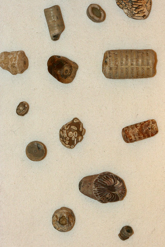 Lake Michigan Fossils