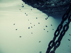 Chains Are Necessary (Hani Amir) Tags: ocean school fish abstract male green water swimming canon chains track underwater shots politics under first amir necessary fade desaturated maldives buoy hani mal g10