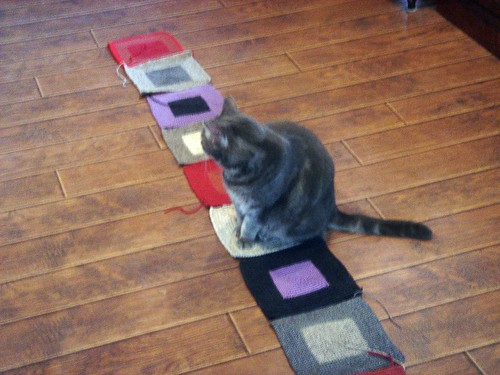 cats like squares