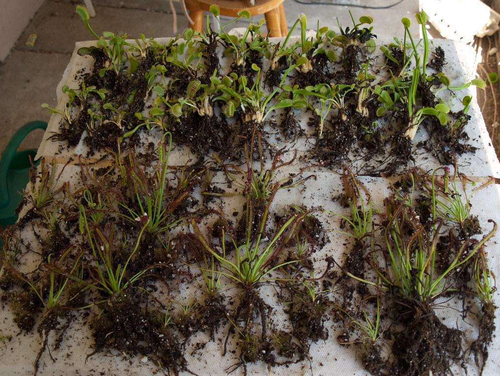 All My Minibog Plants Dug Up