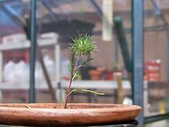 A strange plant we found