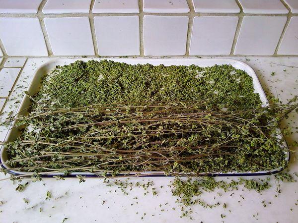 Dried Oregano from the Garden by neocles, on Flickr