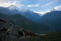 Annapurna foothills 2010 (perfil) Tags: nepal himalaya mountains annapurna anapurna gorapani ghorepani gorepani ghandruk ghandrung pokhara trekking trek dhaulagiri fishtail machapuchhare peak hills