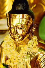 Golden Buddha with Garland (Ben Mitchell2009) Tags: travel flower smile face yellow statue canon gold golden shiny asia southeastasia image buddha shwedagon yangon burma buddhist decoration buddhism garland myanmar rangoon eos66