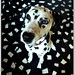 Bad Camouflaged Dalmatian by morbidly_obese