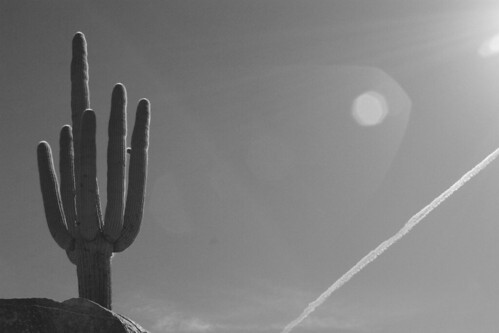 BW_Saguaro