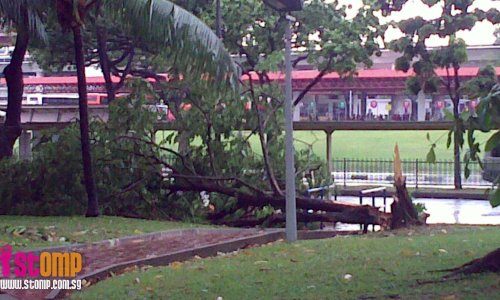 So many uprooted trees seen at Jurong East
