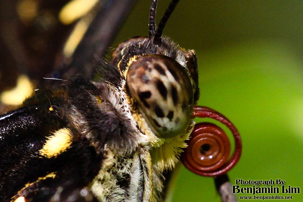 butterflyfarm01_15