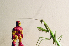 THE INCREDIBLE SHRINKING IRON MAN - THE RETURN OF...THE MANTIS!! (zero g) Tags: mantis insect haiku australia melbourne ironman bugs armor imagination heroes armour eclectic marvelcomics collectibles prayingmantis avengers eeek whimsical tonystark mantid avenger fantasticplastic erratica ladykiller fourcolorworld plasticfigures thetoyshoppe naturearoundyourhouse anythingeverything scificatchall lifeinplastic macrotoys toystoystoys islandoflosttoys toysaholicanonymous reallyunlimited insectphotography ihearttoys comicbooktoys australia2007daybydayonephotoaday 6packphotos haikuheaven plastic52 ironmanthearmoury anythingabsurd forthetotallyobsessiveflickritespost1 sciencefictionunleashed freakgeek atoysperspective horriblewaystodiewhilevisitingaustralia ironman50thanniversary ironman50thbirthday