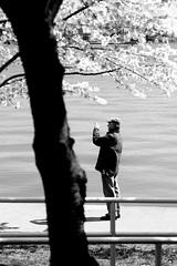 photographer (Hitchcock Creative) Tags: camera bw white man black flower tree water cherry dc washington blossom path basin wdc tidal yelpdcphotocontestwinner