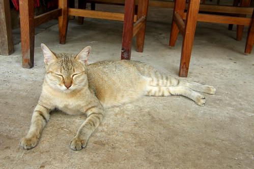 37.貓咪瞇瞇眼