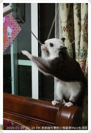 09年二三月小飛鼠Meiz生活照 (31)