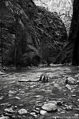 Narrows In Winter (James Marvin Phelps) Tags: park red southwest utah rocks desert cliffs national zion zionnationalpark zionnarrows mandj98 springdaleutah jmpphotography jamesmarvinphelps