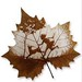 pressed leaf sculpture-running with my dog by moumoualwayssmile
