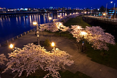 Night Blossom (Jon Asay ) Tags: plaza bridge night oregon river portland cherry japanese blossom steel landing american historical sakura hobo willamette